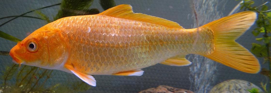 Fish, Amphibians, Invertebrates