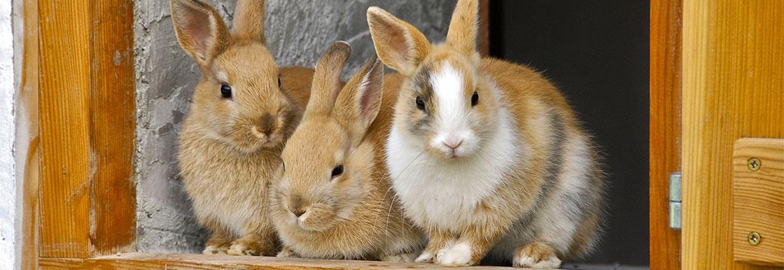 Rabbits and exotic mammals